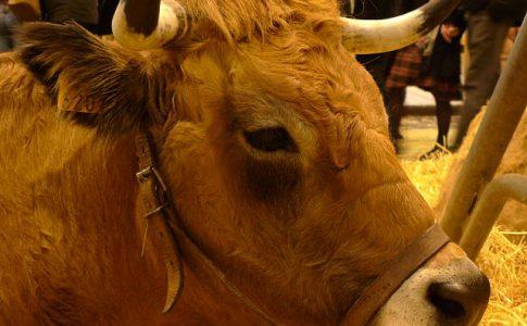 Salon de l Agriculture a Paris, les enfants decouvriront les animaux