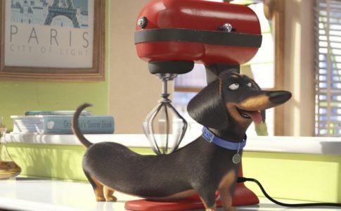 Le film pour enfants « Comme des bêtes » est sorti le 27 juillet 2016 © Universal Pictures