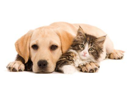 Le coin des chats salon chiens chats 2017 choisir l for Salon des chiens